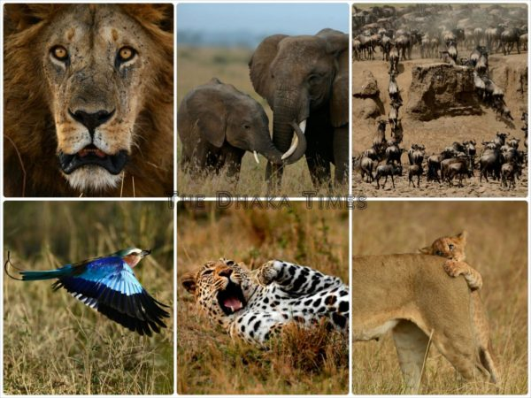 African wildlife_CollageWM1
