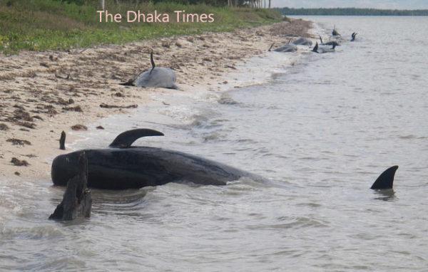 florida-whales