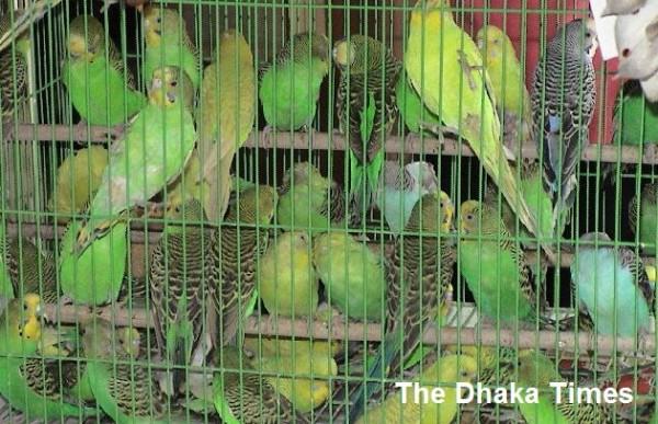 the birds in captivity khacaya