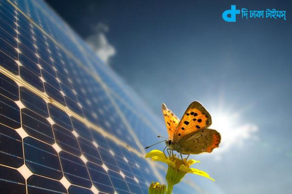 Solar Butterfly-3