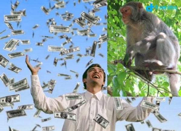 monkeys & Money the rain