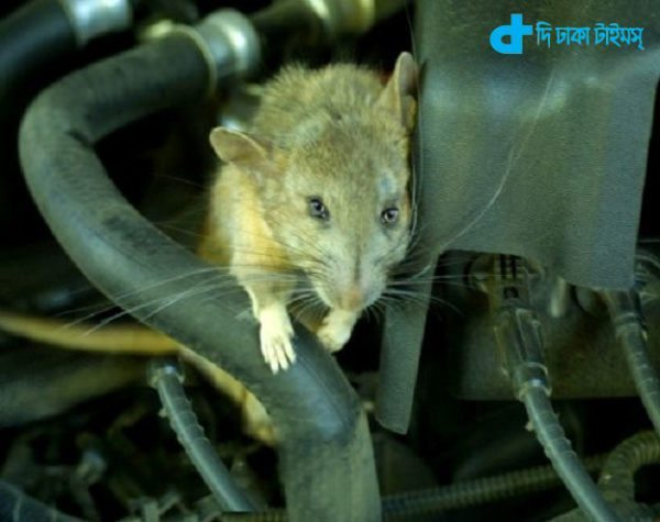 Rats live in the Air