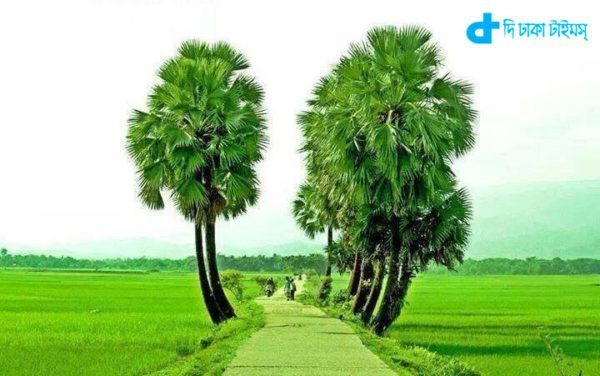 Reflected in the coloring Of Bangladesh