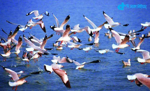 Beauty, natural Leela and birds