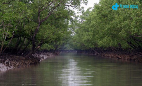 Wonders of the World and the Sundarbans