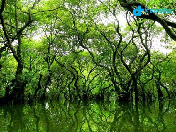 A beautiful wetlands ratar gul