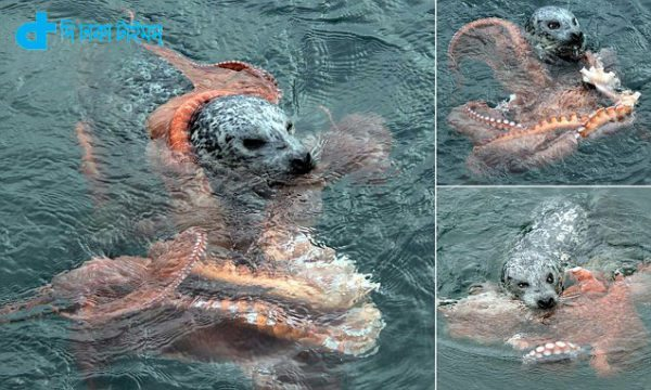 Octopus attacking & sil