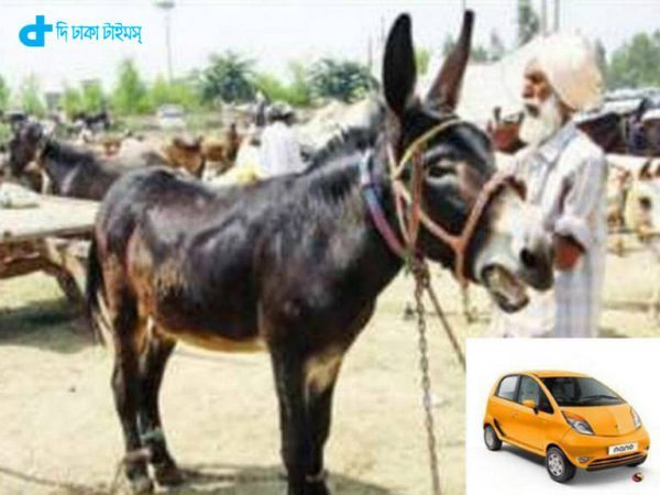the price of a donkey 4 Lac