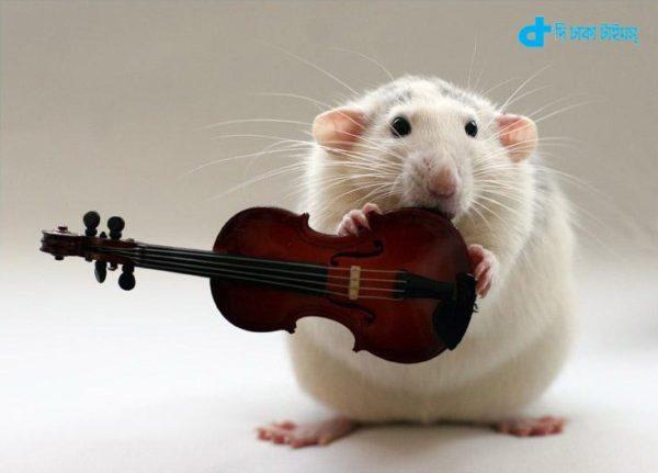 rats song