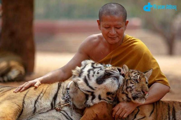 tiger people friendship-3