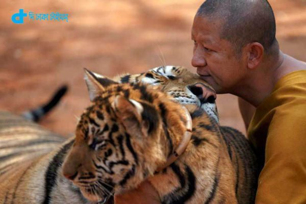 tiger people friendship