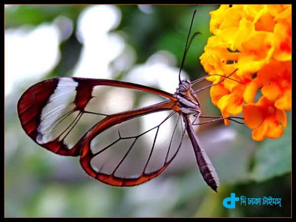 Butterflies and our nature