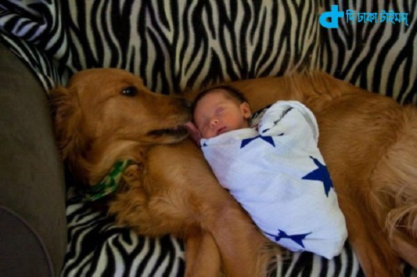 Children and dog relationship-4