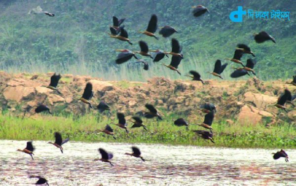 Guest birds and our nature
