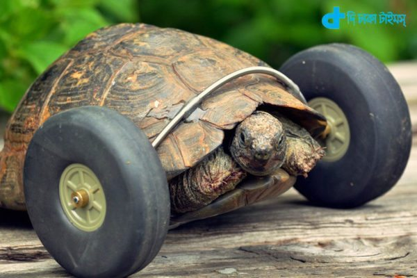 an old turtle mount