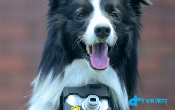camera dogs & pictures