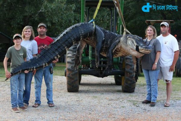 world's biggest crocodile story