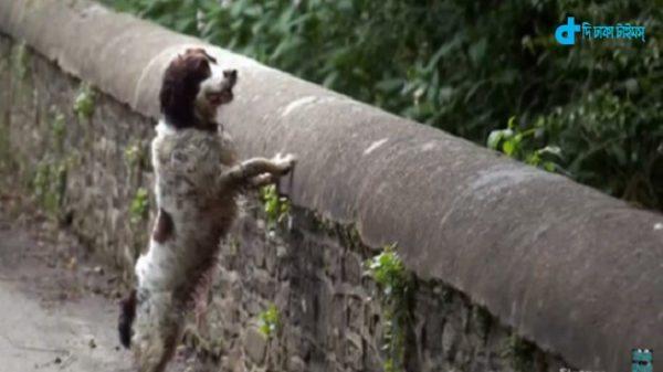 600 dogs suicide