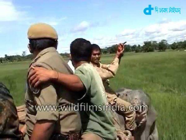 Elephant riding a tiger attack-2