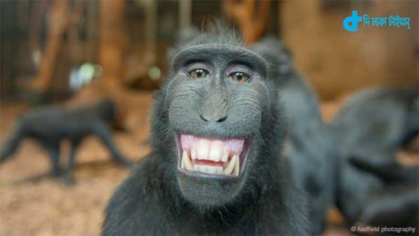 humans can laugh chimpanzees Like