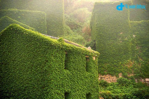 Green Village In Zhoushan