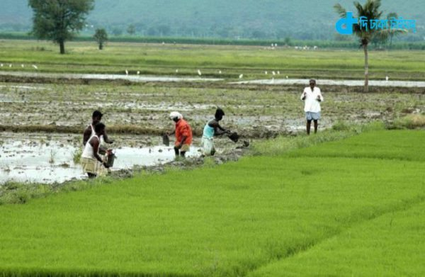 Busy farmers and our rural Bengali