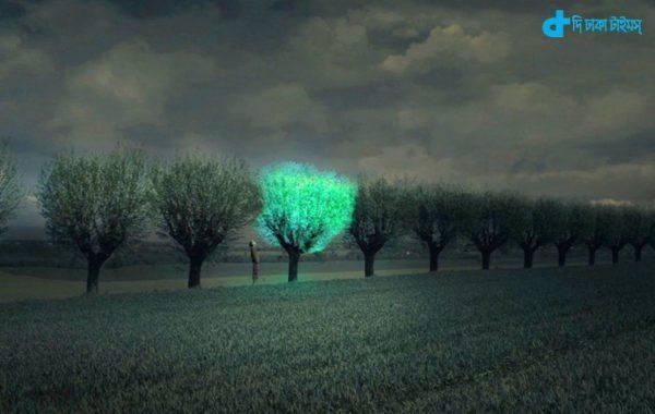 Shining a tree story