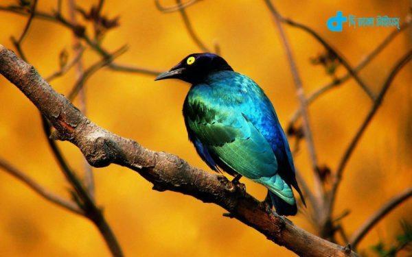 stunningly beautiful birds