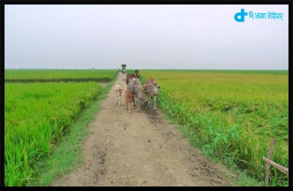 Bengali village and our farmer