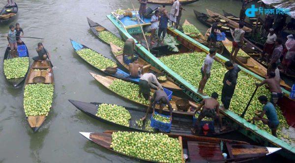 Guava, village & Mass Season