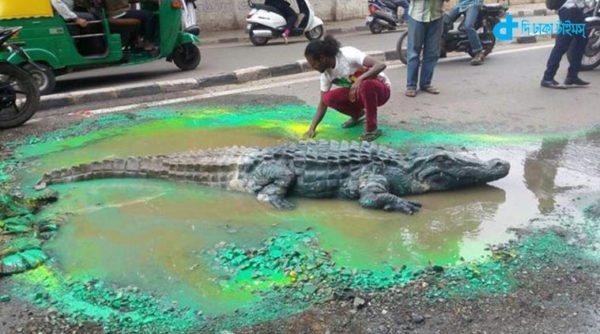 Highways crocodile