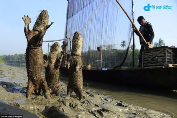 Otters abolished