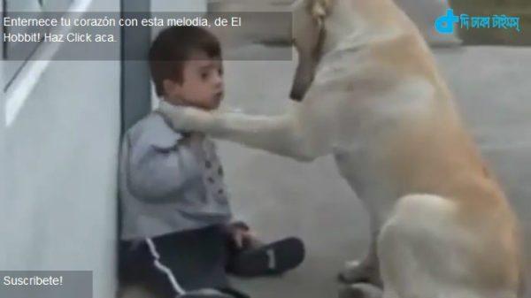 scene of canine empathy towards children