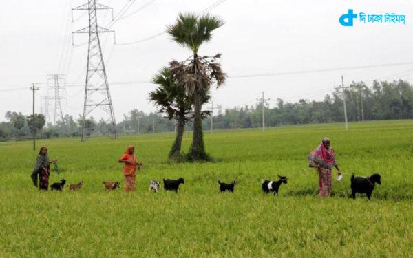 Goats and rural women