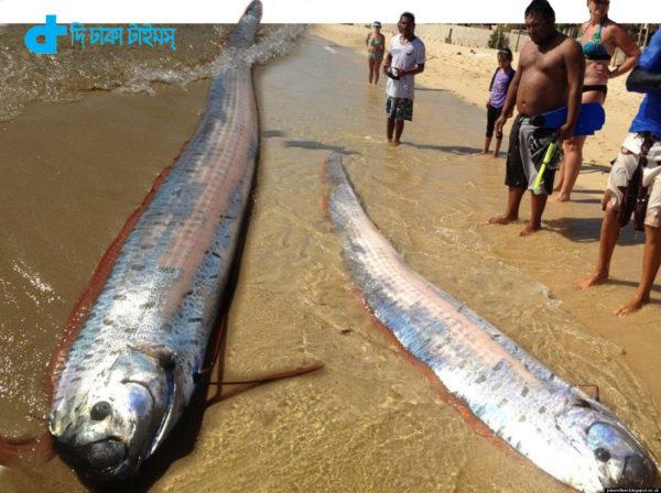 Sea snakes- 36 feet tall