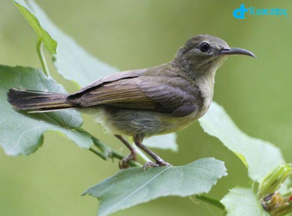 A small nice bird mautusi