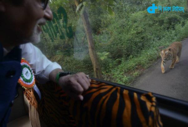 Amitabha & tiger