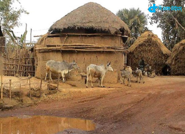 Cows, mud houses, haystack Farmer