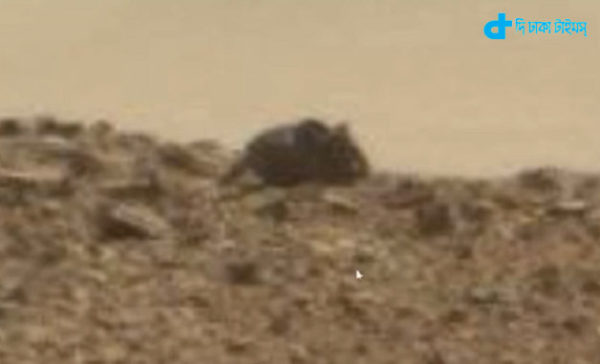 Mars there was a huge rat
