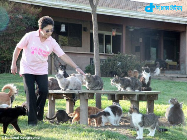 woman with a thousand cats-5