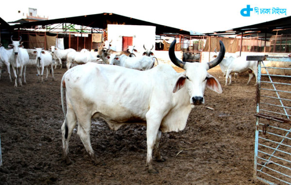 2015 Indian personality 'cow'
