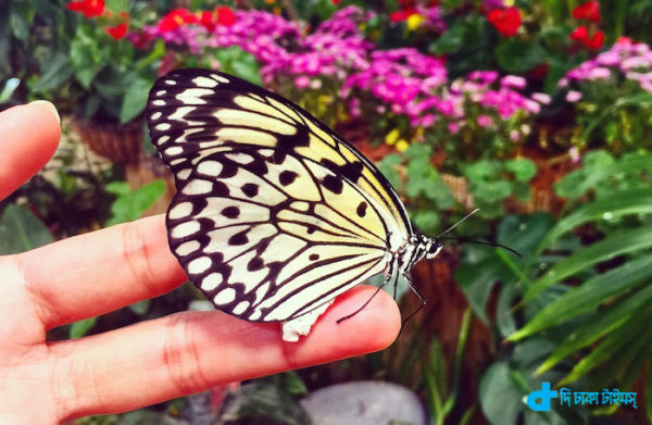 A butterfly garden in heart of desert in Dubai-3