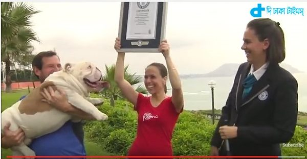 Guinness Book of Records as the Bulldog