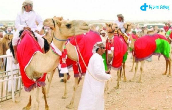 camel beauty contest was organized