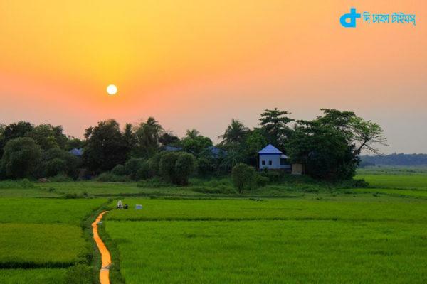 corn-syamala Bangladesh