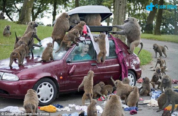 women & village monkey