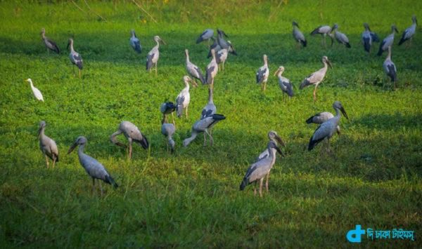 Winter migratory birds
