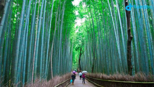 A bamboo garden beauty