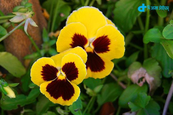 A great winter flower