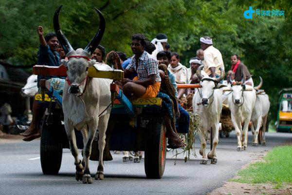 Car Rental 5 thousand cows